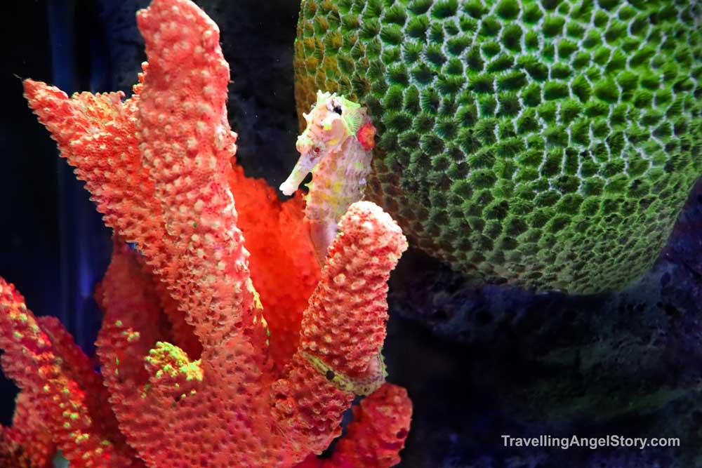 Seahorse hiding