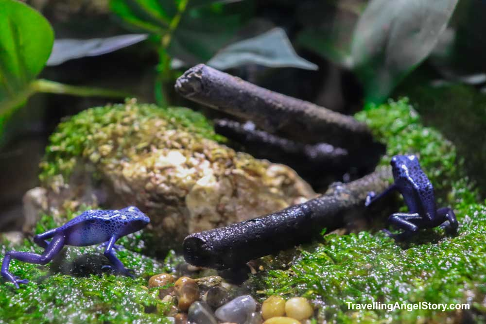 Tiny Purple Frogs
